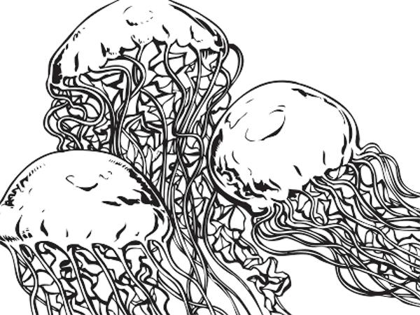 Jellies coloring #9, Download drawings