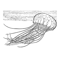 Jellyfish coloring #11, Download drawings