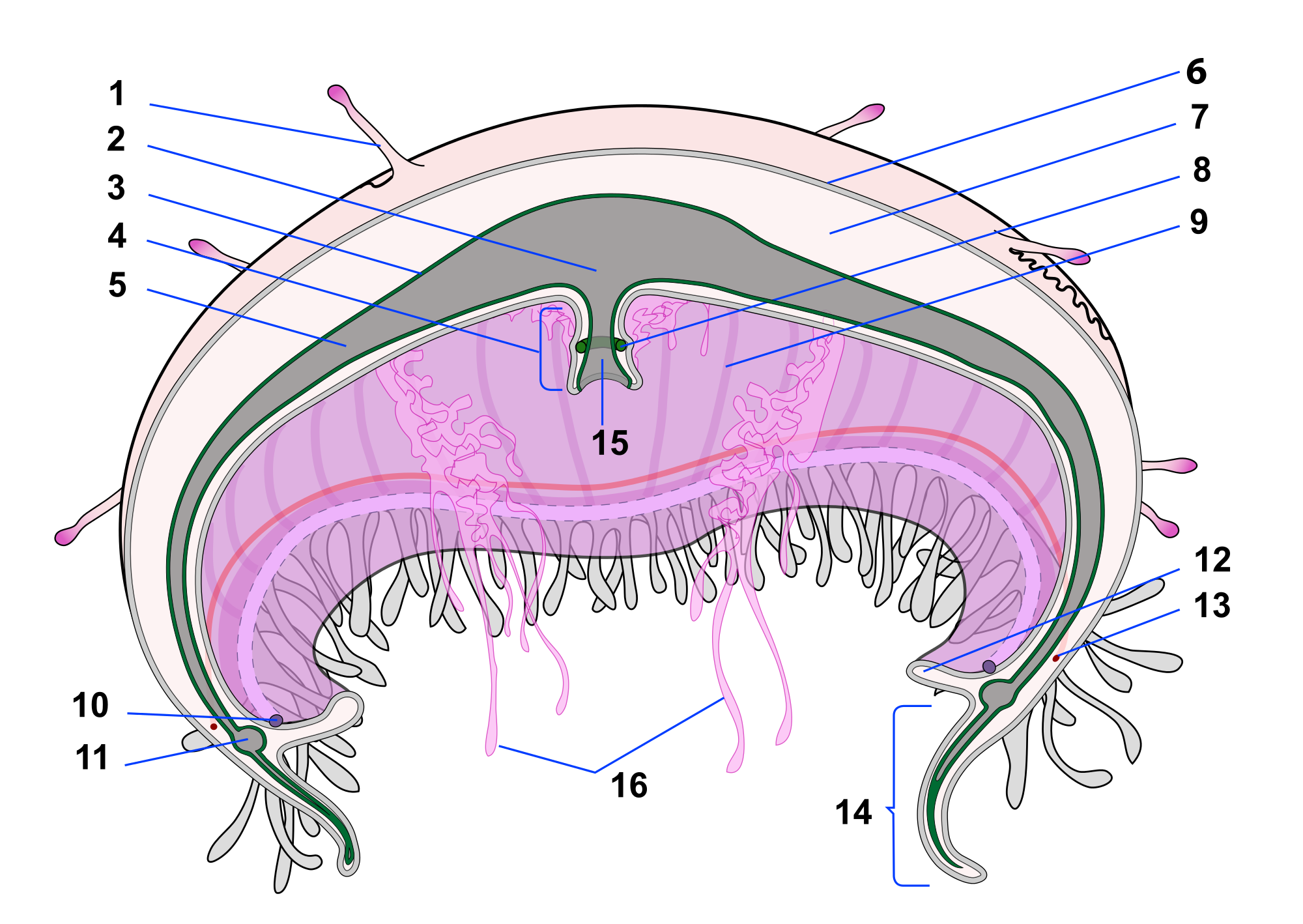 Jellyfish svg #1, Download drawings