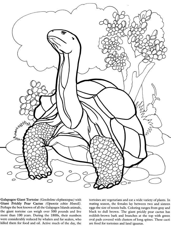 Jonhs Island coloring #17, Download drawings