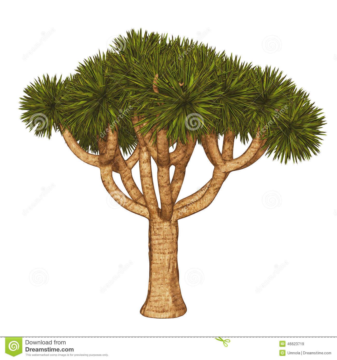 Joshua Tree clipart #19, Download drawings
