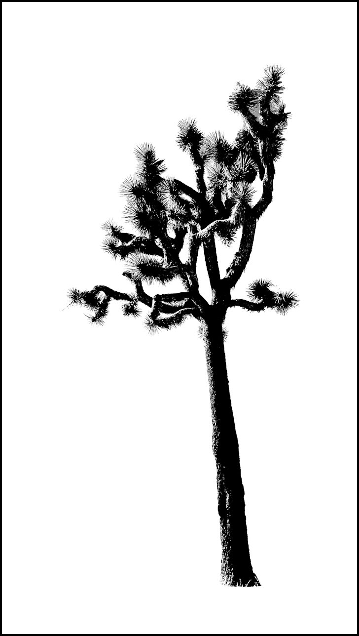 Joshua Tree clipart #1, Download drawings
