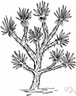 Joshua Tree clipart #11, Download drawings