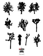 Joshua Tree clipart #14, Download drawings