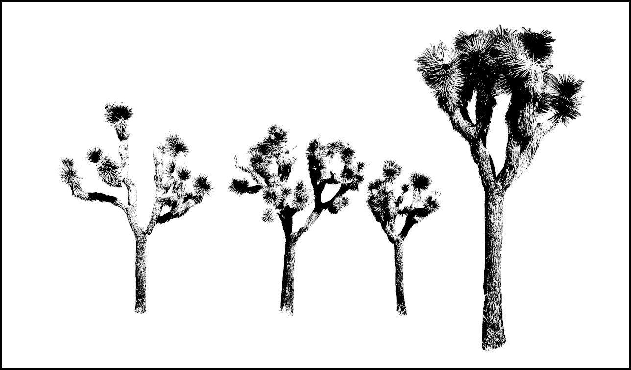 Joshua Tree clipart #15, Download drawings
