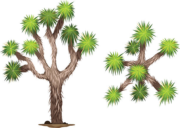 Joshua Tree clipart #7, Download drawings