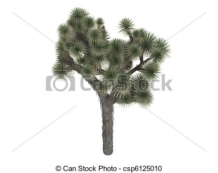Joshua Tree clipart #3, Download drawings