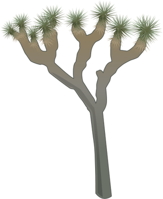 Joshua Tree clipart #19, Download drawings