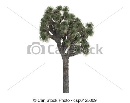 Joshua Tree clipart #5, Download drawings