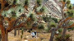 Joshua Tree National Park clipart #8, Download drawings