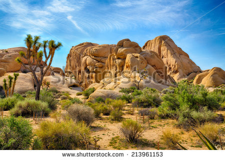 Joshua Tree National Park clipart #2, Download drawings