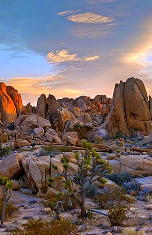 Joshua Tree National Park clipart #4, Download drawings