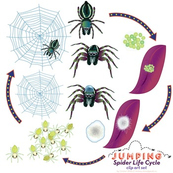 Jumping Spider clipart #7, Download drawings