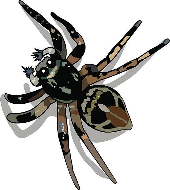Jumping Spider clipart #11, Download drawings
