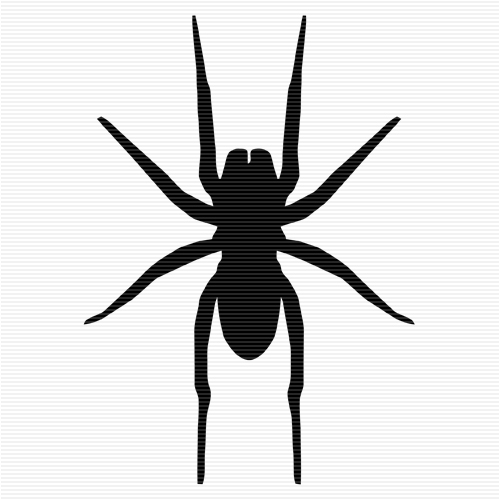 Jumping Spider clipart #12, Download drawings
