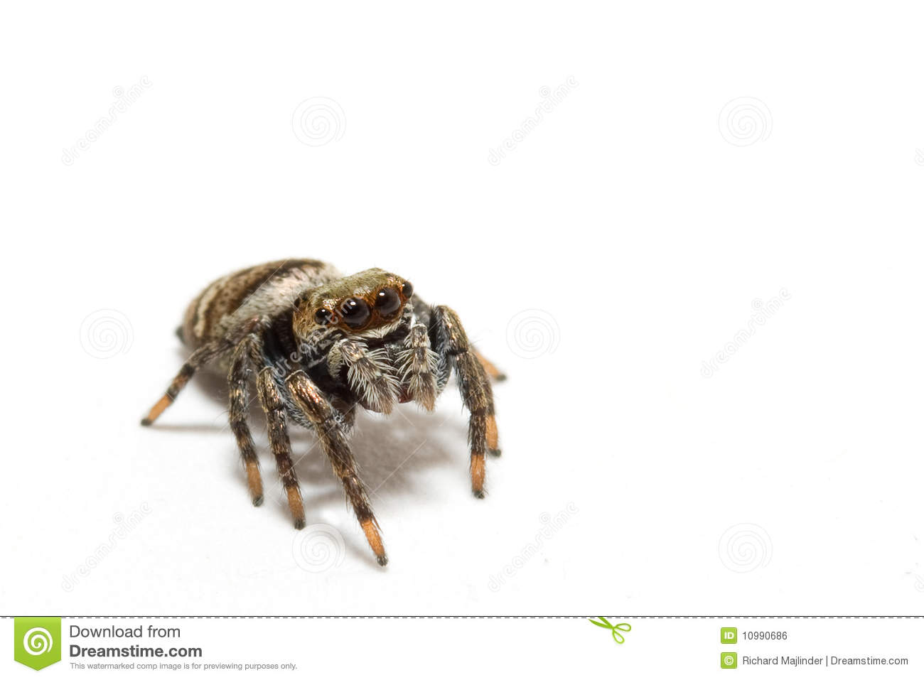Jumping Spider clipart #9, Download drawings