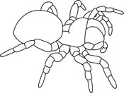 Jumping Spider clipart #10, Download drawings