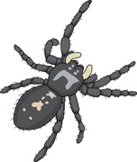 Jumping Spider clipart #19, Download drawings