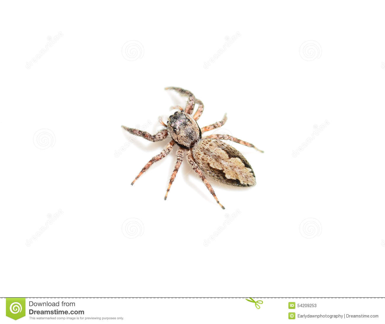 Jumping Spider clipart #14, Download drawings