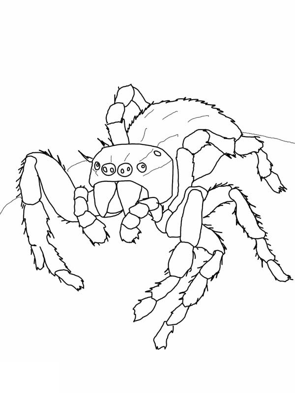 Jumping Spider coloring #1, Download drawings