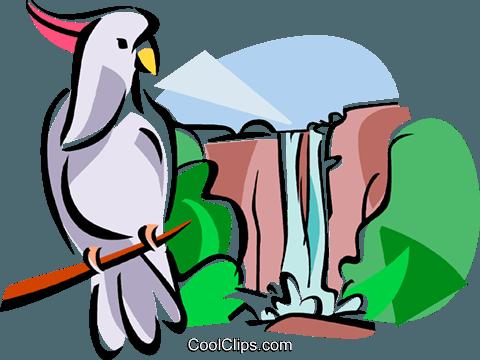 Kakadu clipart #19, Download drawings