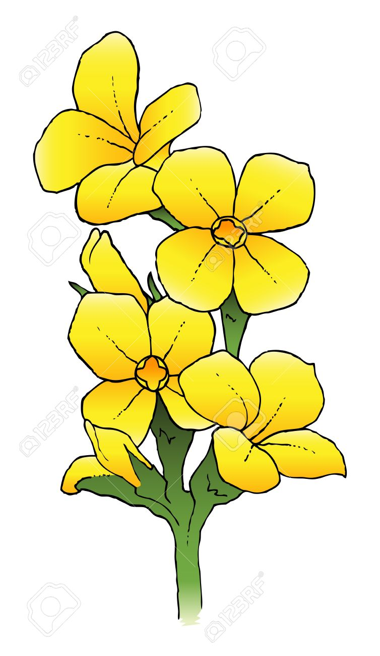 Kalanchoe clipart #20, Download drawings