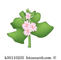 Kalanchoe clipart #16, Download drawings