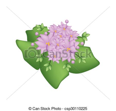 Kalanchoe clipart #11, Download drawings