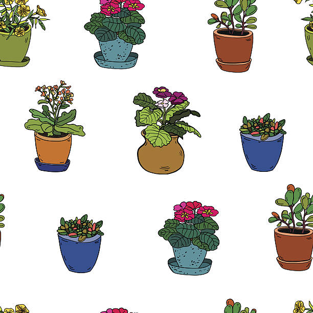 Kalanchoe clipart #6, Download drawings