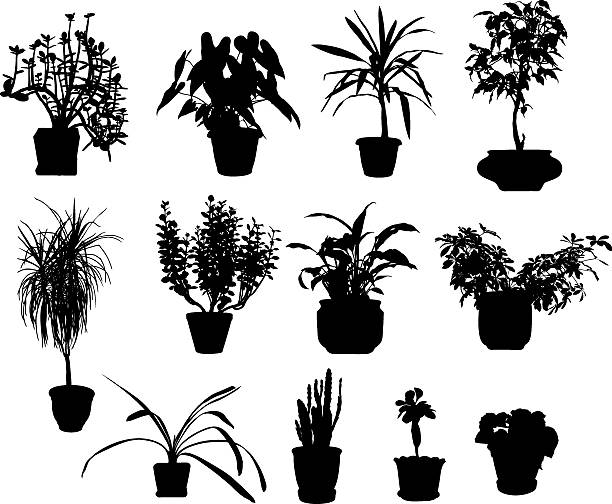 Kalanchoe clipart #3, Download drawings