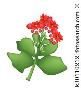 Kalanchoe clipart #19, Download drawings
