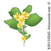 Kalanchoe clipart #18, Download drawings