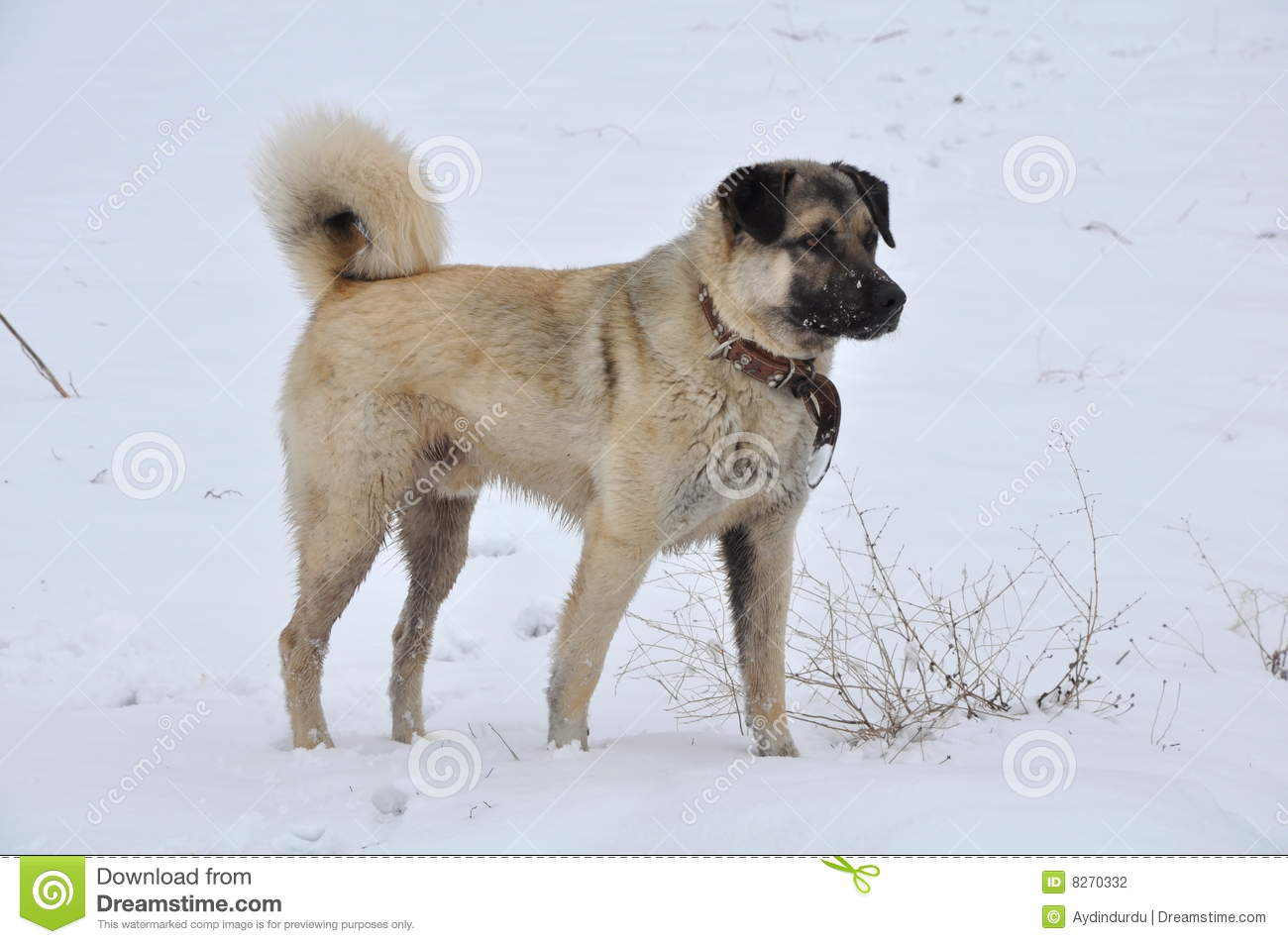 Kangal Dog clipart #16, Download drawings