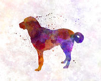 Kangal Dog clipart #13, Download drawings