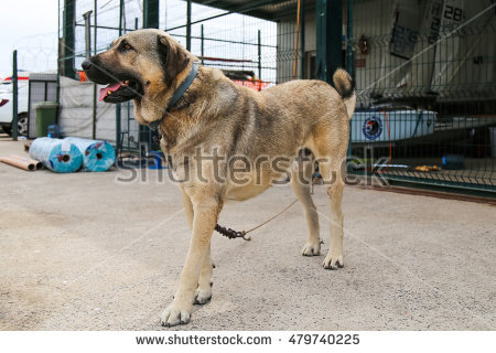 Kangal Dog clipart #1, Download drawings