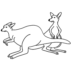 Kangaroo coloring #6, Download drawings