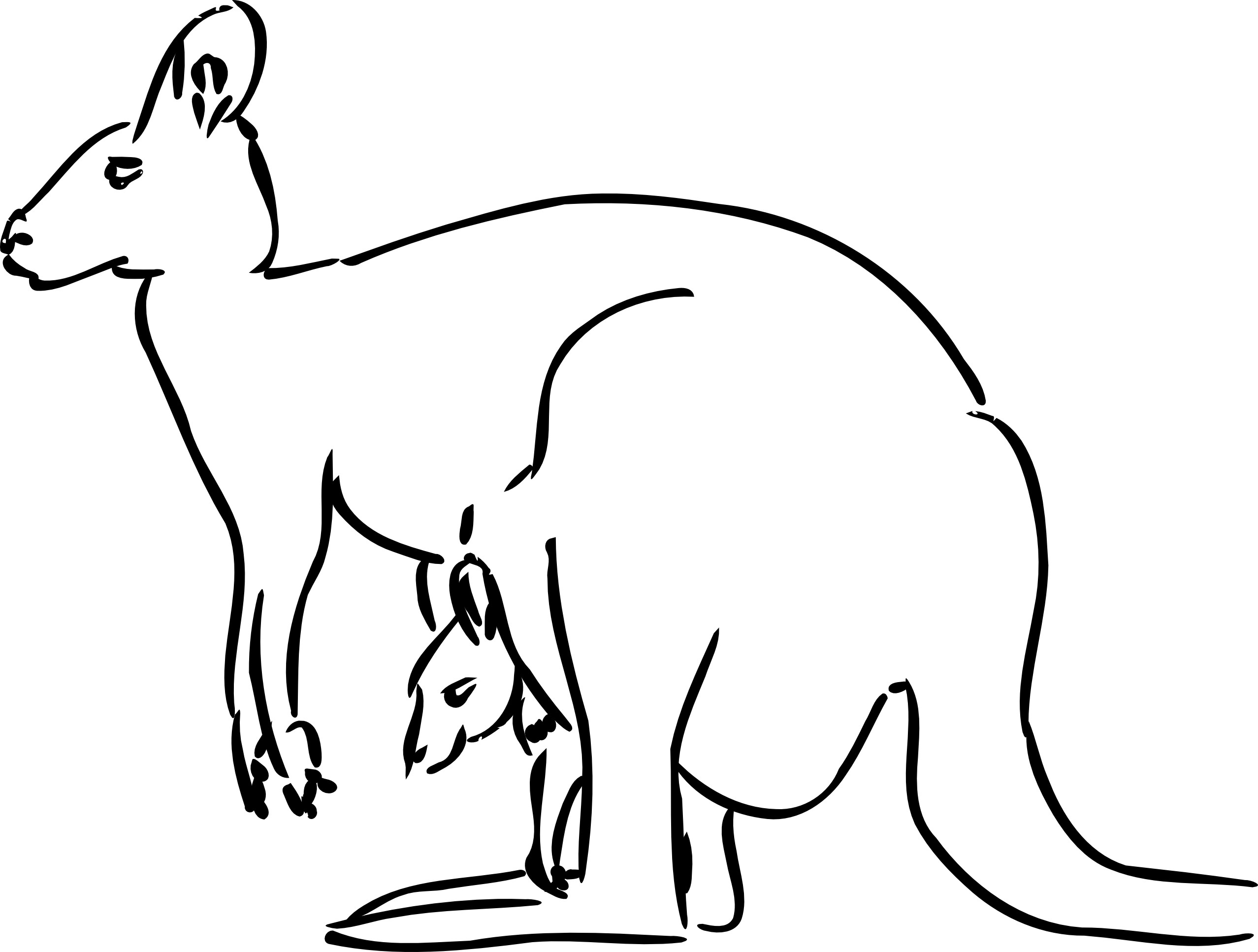 Kangaroo coloring #2, Download drawings