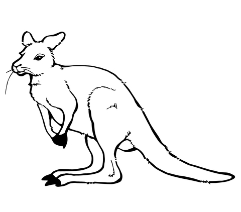 Kangaroo coloring #11, Download drawings