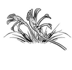 Kangaroo Paw clipart #7, Download drawings