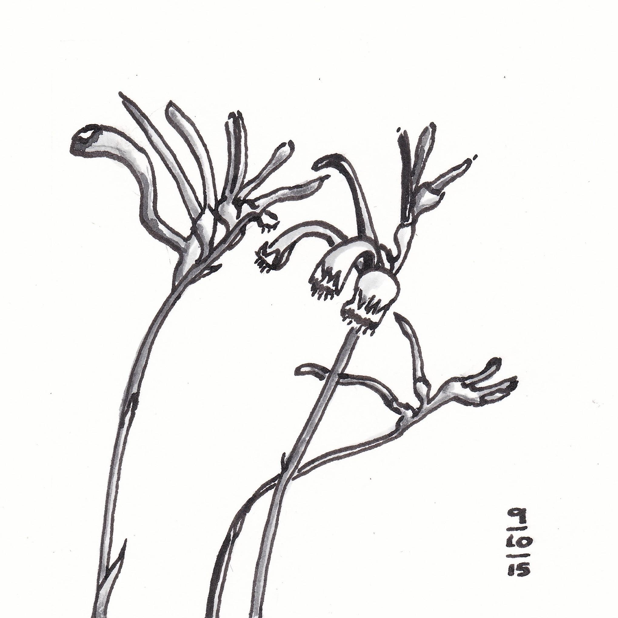 Kangaroo Paw coloring #13, Download drawings