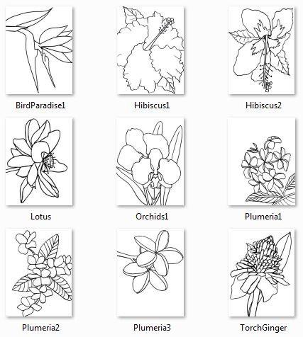 Kauai coloring #16, Download drawings