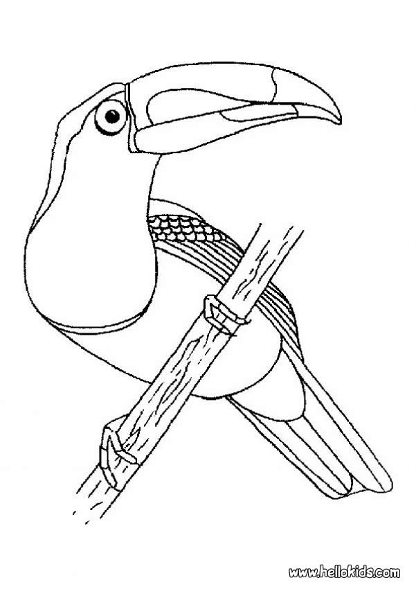 Keel-billed Toucan coloring #5, Download drawings