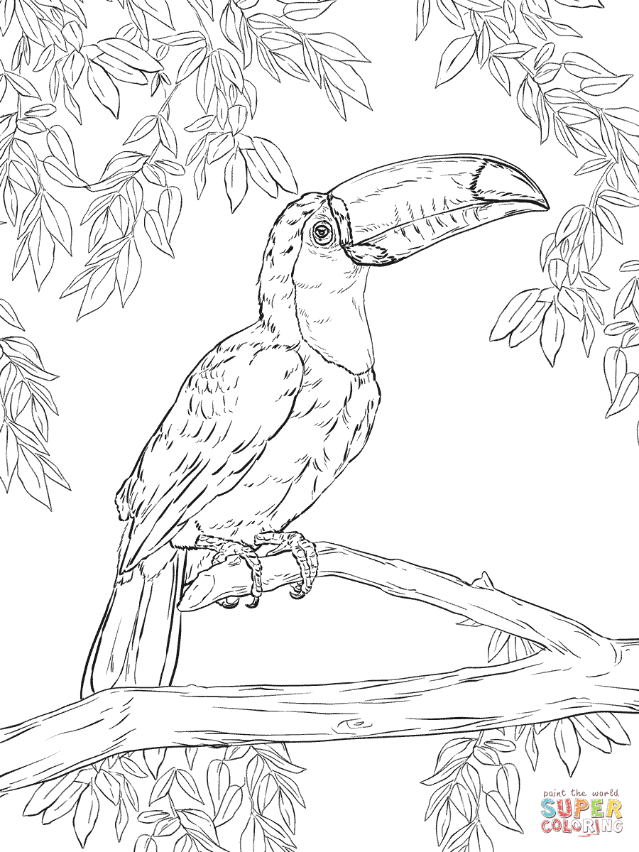 Keel-billed Toucan coloring #4, Download drawings