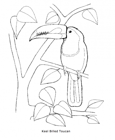 Keel-billed Toucan coloring #2, Download drawings