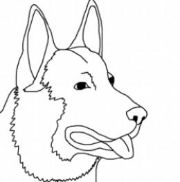 Kelpie coloring #9, Download drawings
