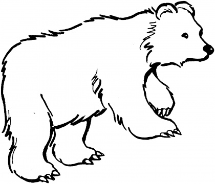 Kermode Bear clipart #10, Download drawings