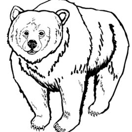 Kermode Bear coloring #5, Download drawings
