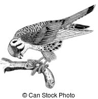 Kestrel clipart #7, Download drawings