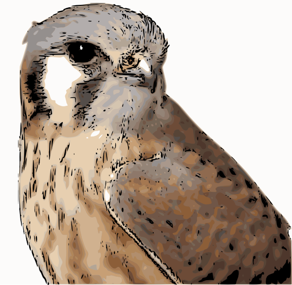 Kestrel clipart #10, Download drawings