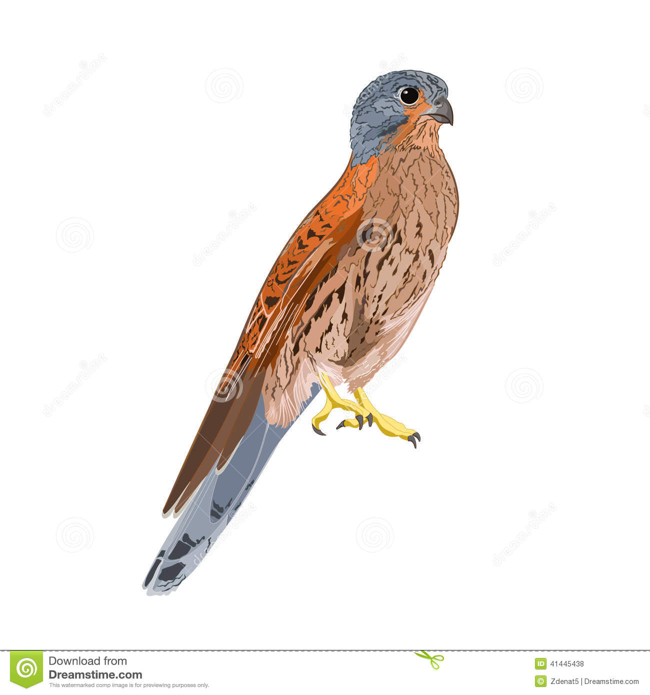 Kestrel clipart #3, Download drawings